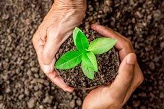 Atitudes para reduzir a produção de CO2 na sua empresa